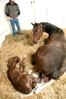13 Prime colors - Girolamo filly