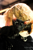Candids Cats & thier people-7006