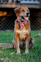 Rainey in Bandana -0426