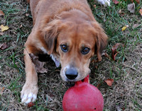 Rainey and her ball-0453