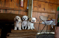 Dogs in the shed pose-9106