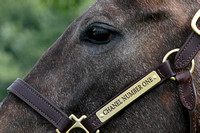 10- 13 English Channel Filly - Name Plate 8029-2