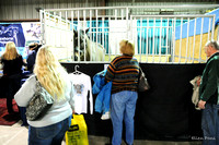 Day 2 Horse Expo MD