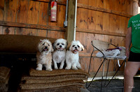 Dogs in the shed pose-9108