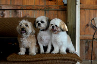 Dogs in the shed pose-9113